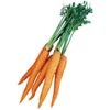 Морковь (валом) Нидерланды. Опт и в розницу. Доставка